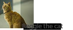 Reggie the cat